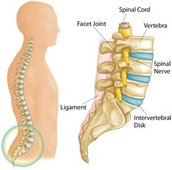 Facet Joint Osteoarthritis