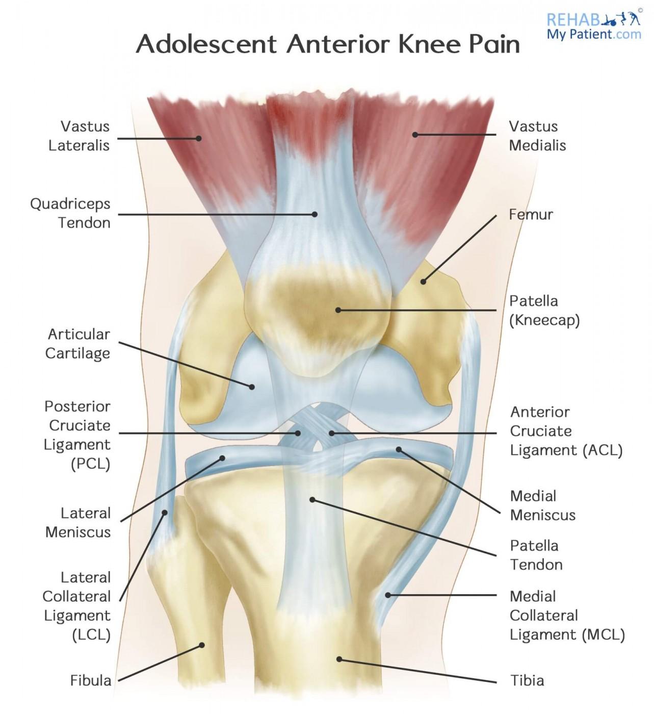 Adolescent Anterior Knee Pain Rehab My Patient