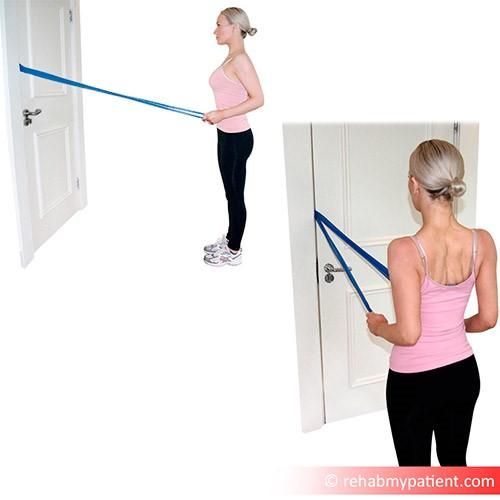 Biceps brachii exercises