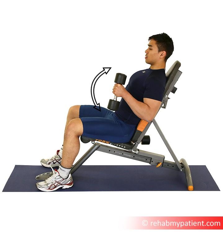 brachialis exercise