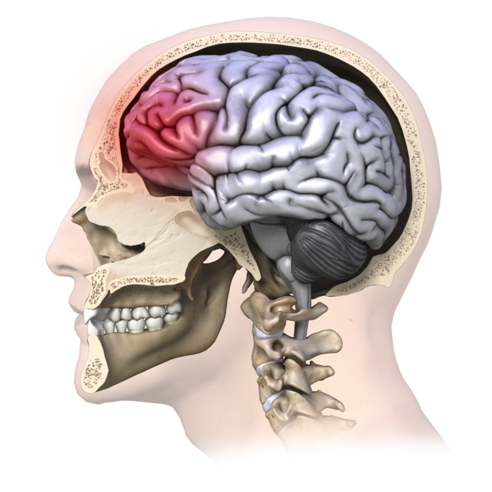 Concussion   Rehab My Patient
