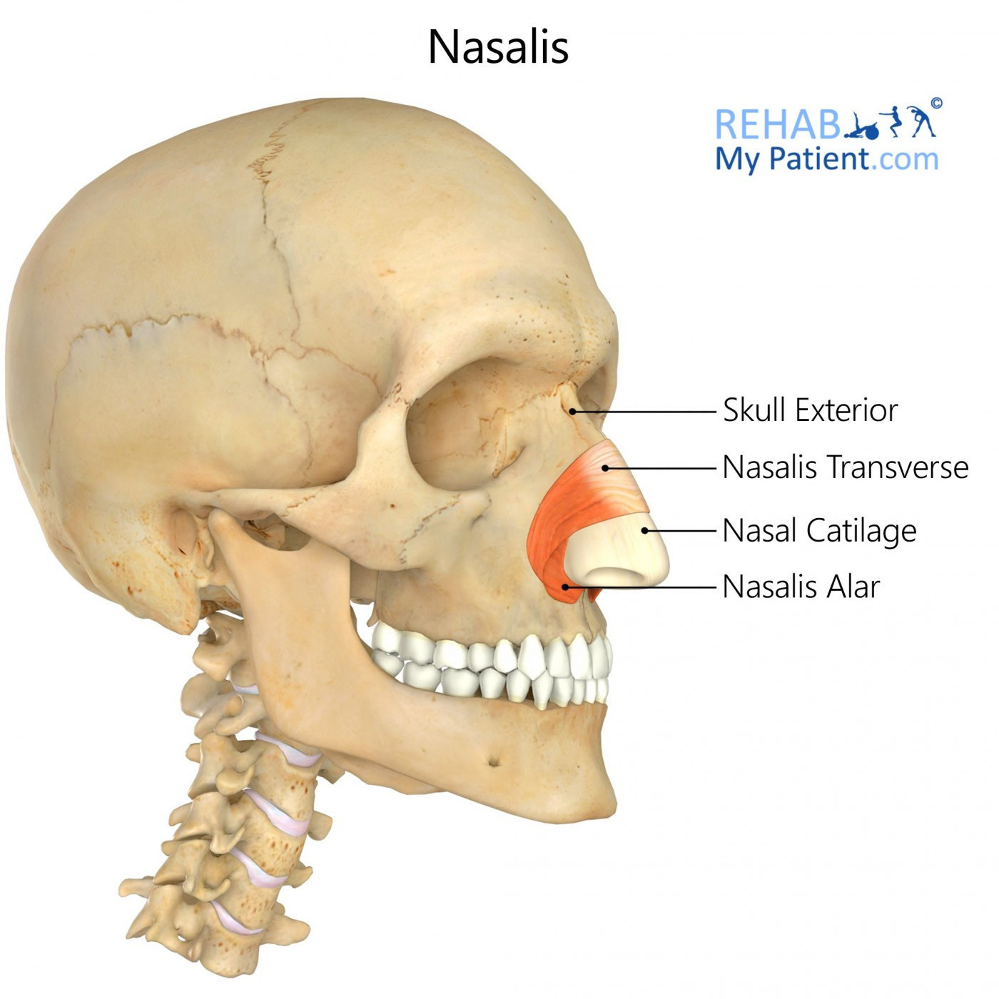 Nasalis